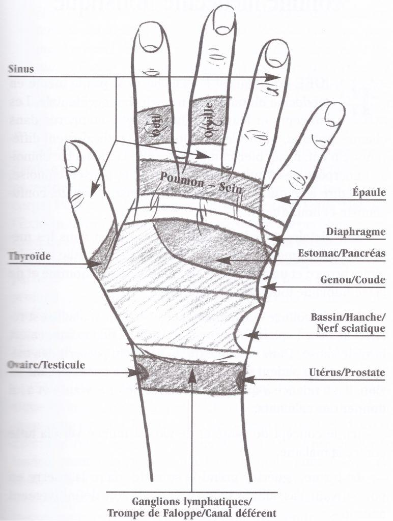 vue-dorsale-main-droite