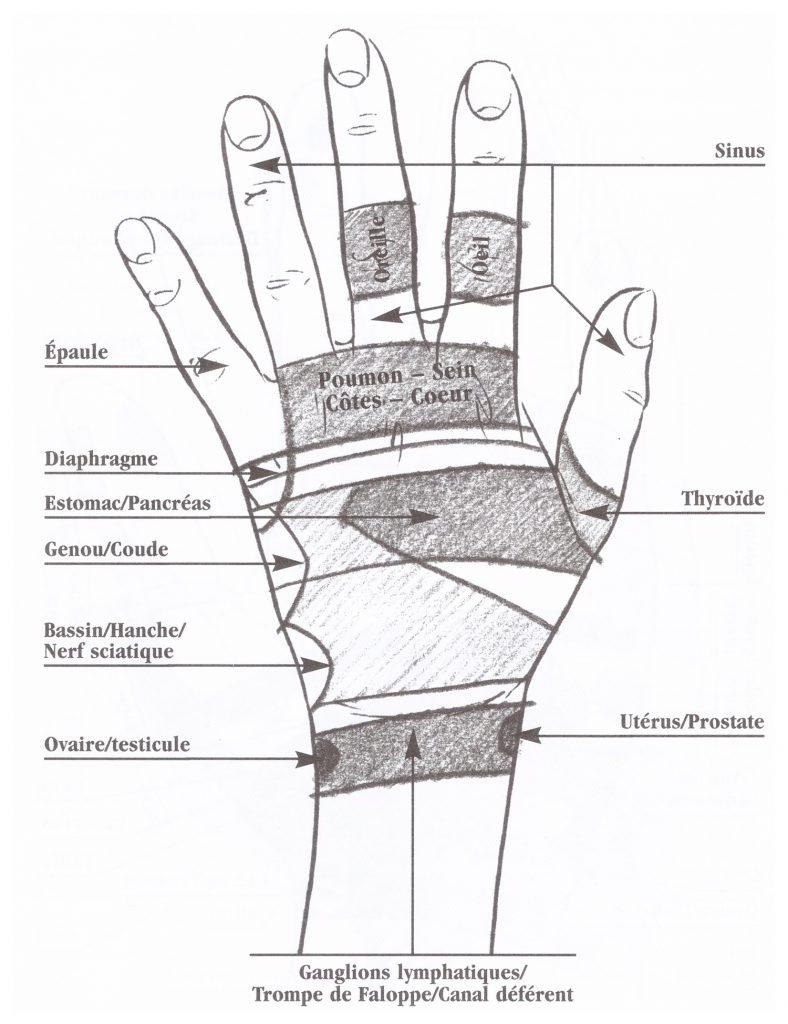zone-reflexe-dorsale-maingauche